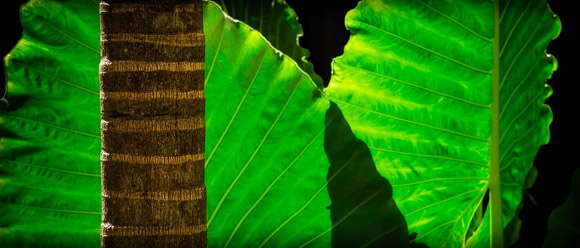 backlit leaf fronds and shadow