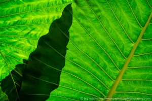 backlit overlapping leaf fronds
