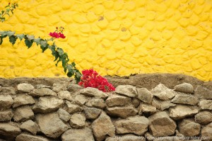 red flowers against yellow stone wall