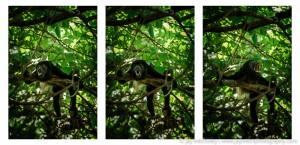 howler monkey triptych
