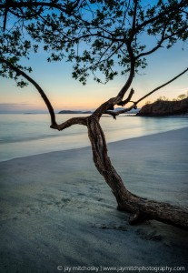 forked tree on beach at dawn